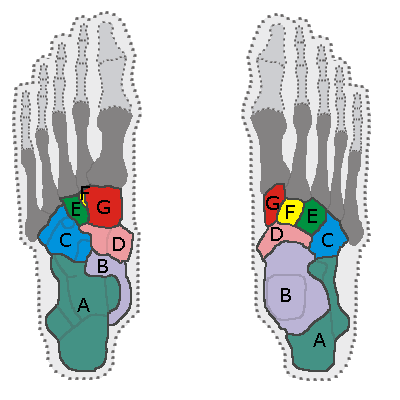 Pin By Stephanie Kane On Medschool Ankle Anatomy Foot Anatomy