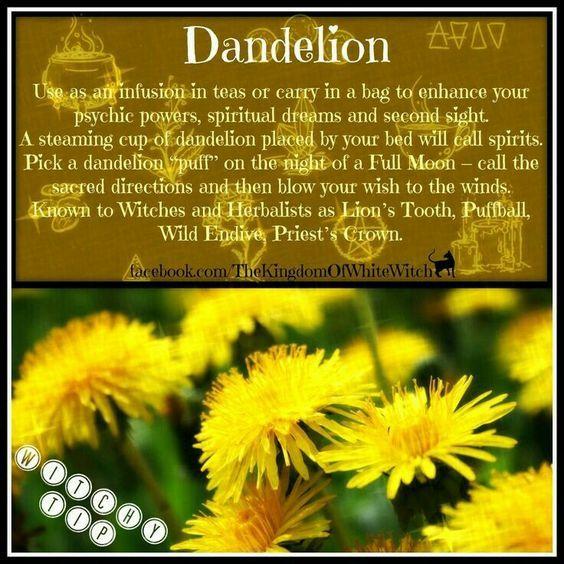 Magical Uses For Dandelion Magic Herbs Herbal Magic Magical Herbs