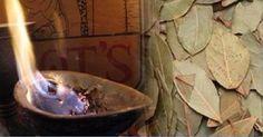 Está curioso(a) para saber por que motivo deve-se queimar e cheirar a fumaça das folhas de louro? Esta é uma velha receita. Mas, antes de saber por que ela deve ser feita, vale a pena saber um pouco sobre o louro, não é mesmo? O louro é usado desde os tempos antigos.