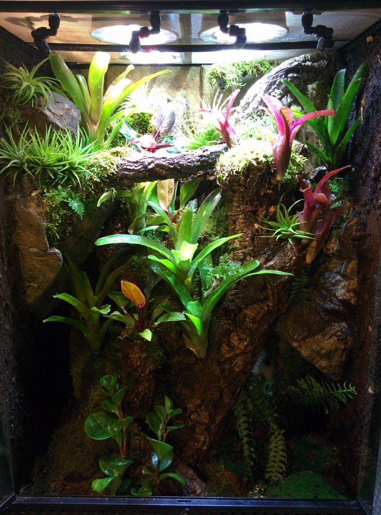 The Josh S Frogs Tankless Dart Frog Kits Are Aimed At Those Who