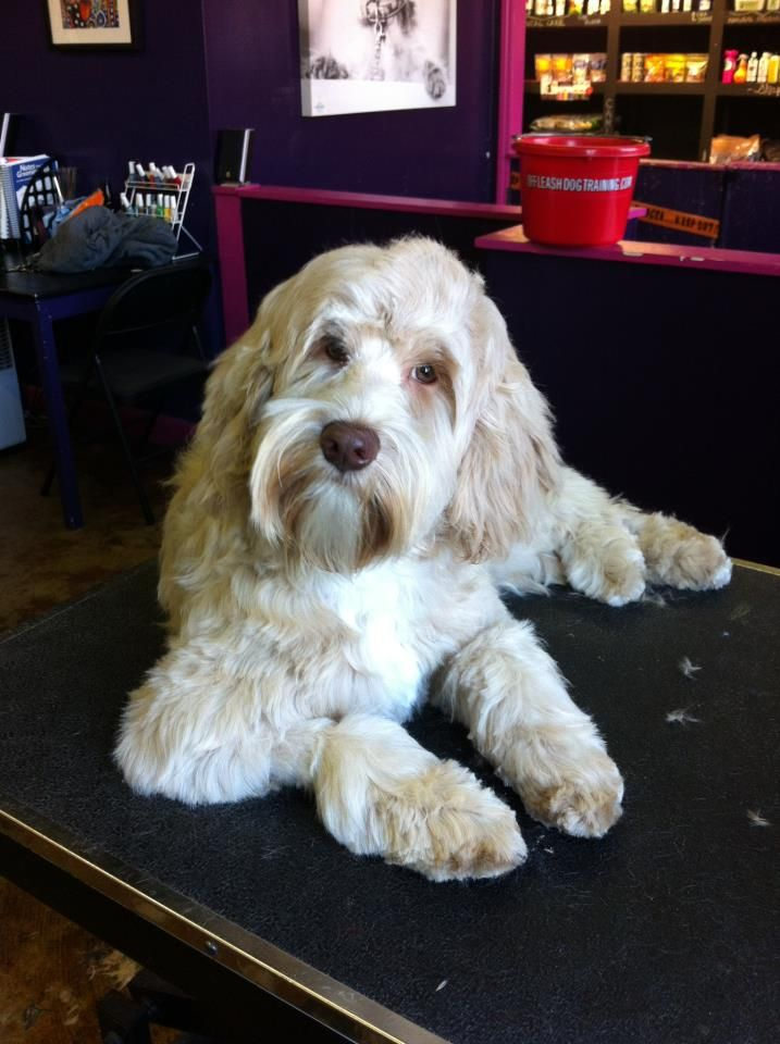 Thedogsalon Com With Images Dog Grooming Salons