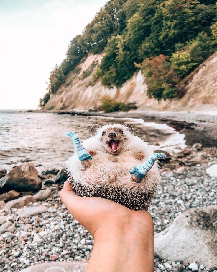 19 Fotos, die die Welt zum Lächeln bringen | FunMary - Animals Blog - #bringen #die #Fotos #FunMary #Lächeln - Monica Lenihan #cuteanimalphotos