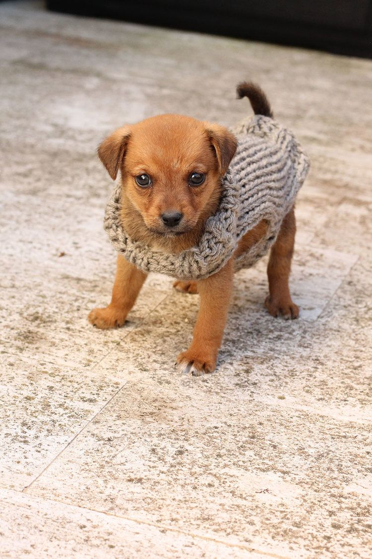 Unique Knitted Dog Sweater Pattern Free Pattern - Blanket Knitting ...