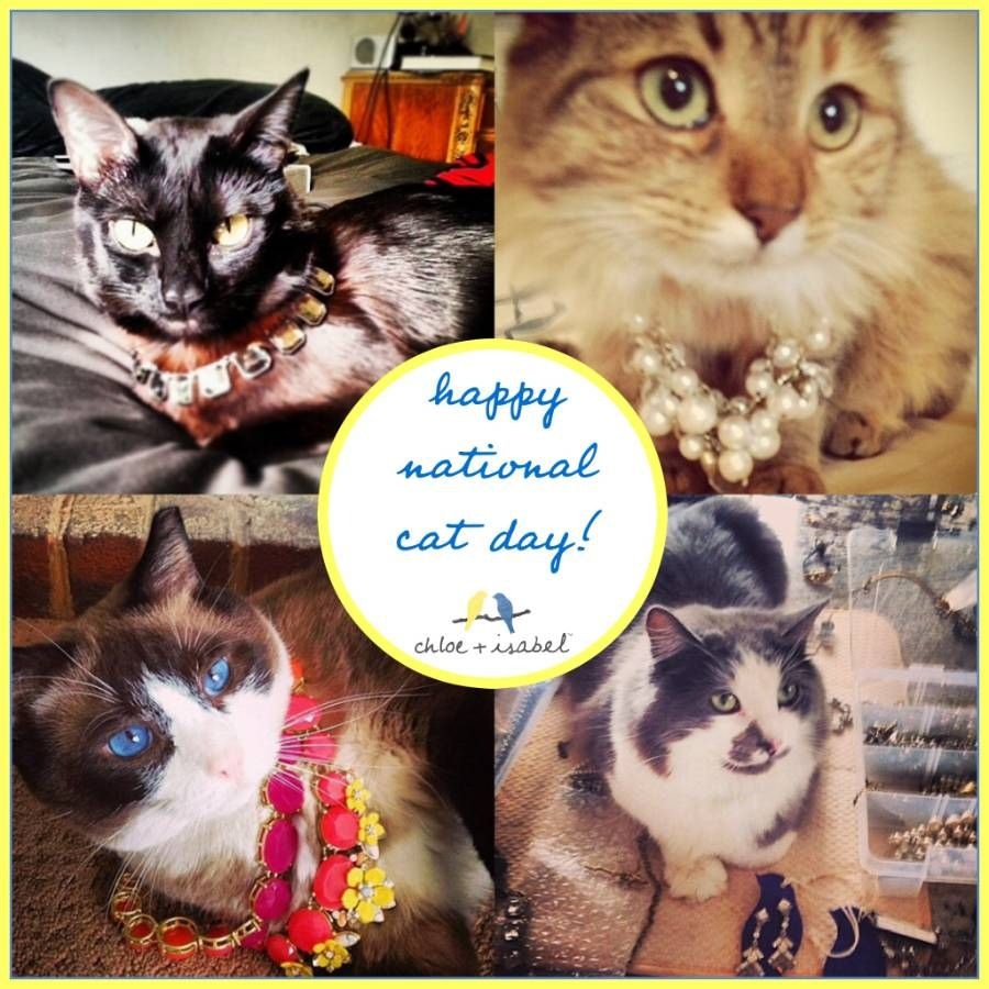 Happy National Cat Day! National cat day, Free cats