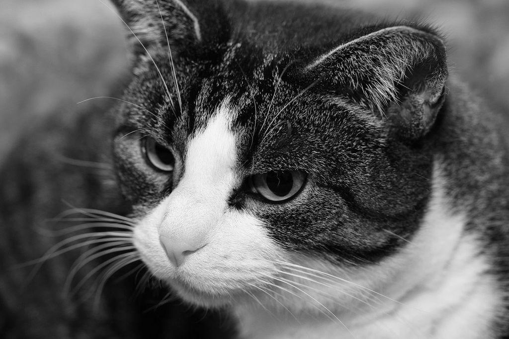 beryl the cat | Flickr - Photo Sharing!