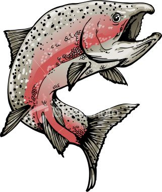 Salmon In Spawning Colors Swimming Or Jumping 2 Spot Colors Plus