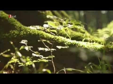 Peter Wohlleben Secret Life Of Trees Has English Captions