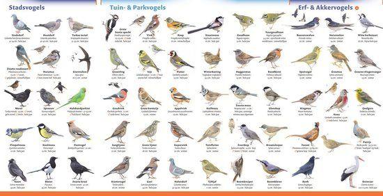 Verbazingwekkend soorten vogels spanje - Google zoeken | Vogels, Zoogdieren, Dieren NK-19