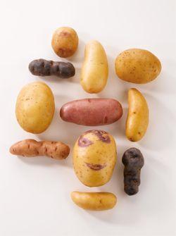 decouvrir-les-pommes-de-terre/les-pommes-de-terre-selon-l-usage-culinaire