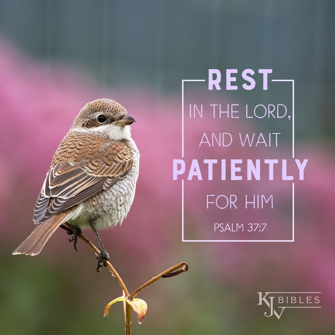Rest in the Lord - Psalm 37:7 KJV | Rest in the lord, Psalm 37 7, Bible