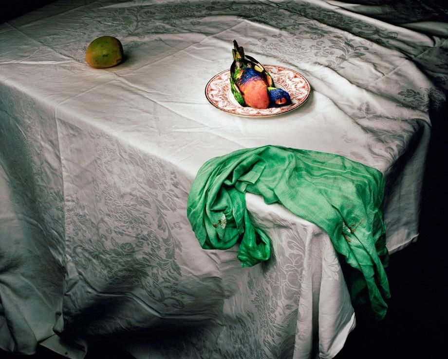 Making Roadkill Beautiful: Lorikeet with green cloth.  Marian Drew.