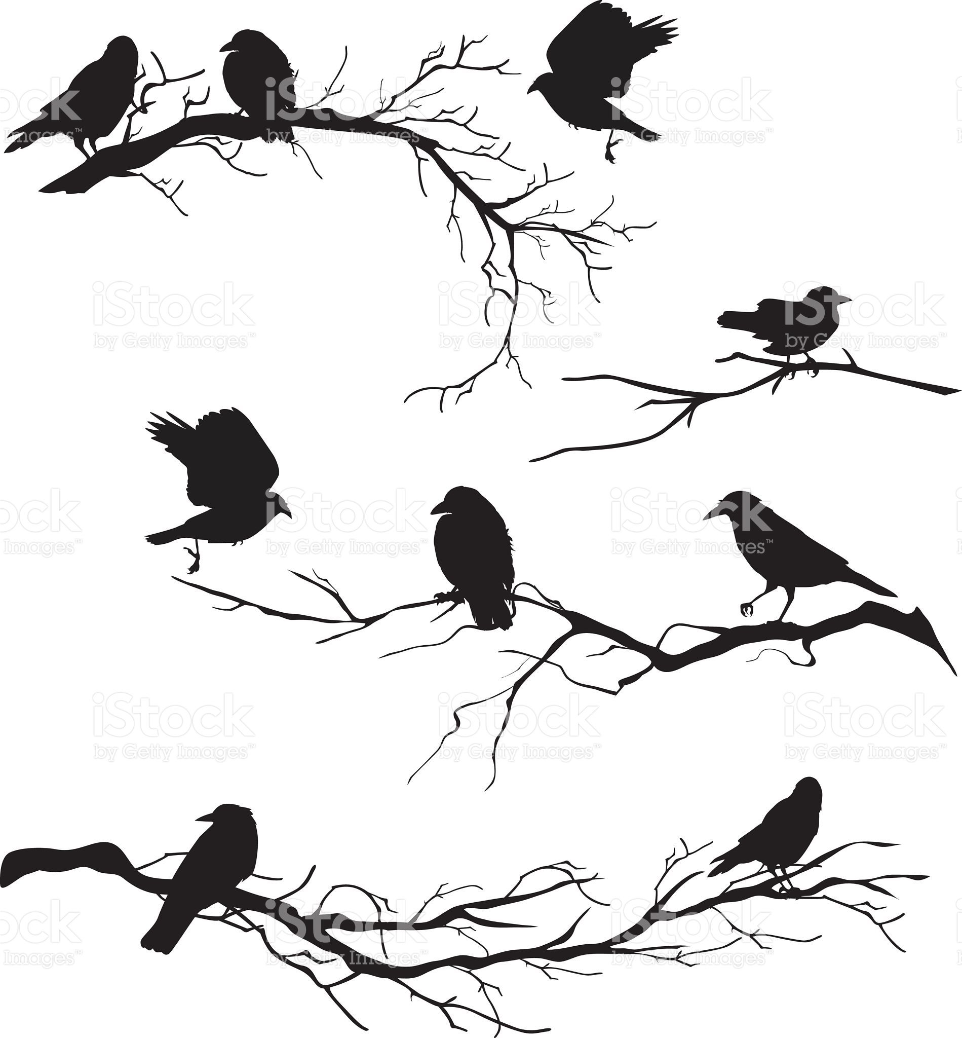 Crows perched on branches Crows