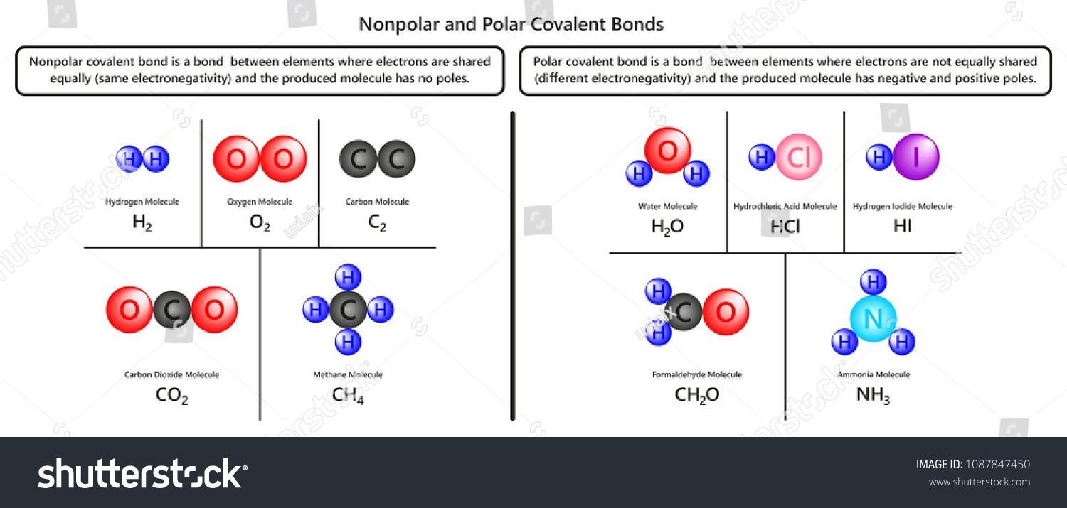 Nonpolar And Polar Covalent Bonds Infographic Diagram With Examples Of Hydrogen Oxygen Carbon Dioxide Methane Wate Covalent Bonding Polar Graphics Design Ideas