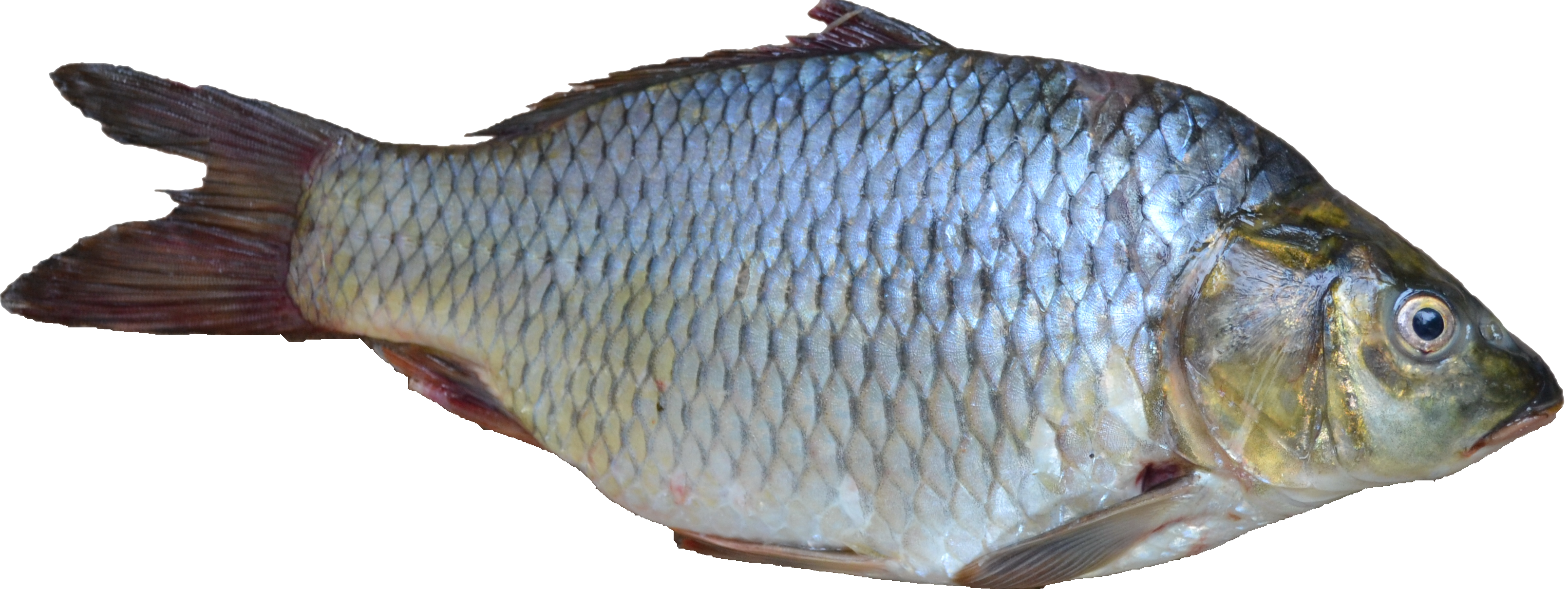 cropped-fish_PNG1158.png (3219×1211)