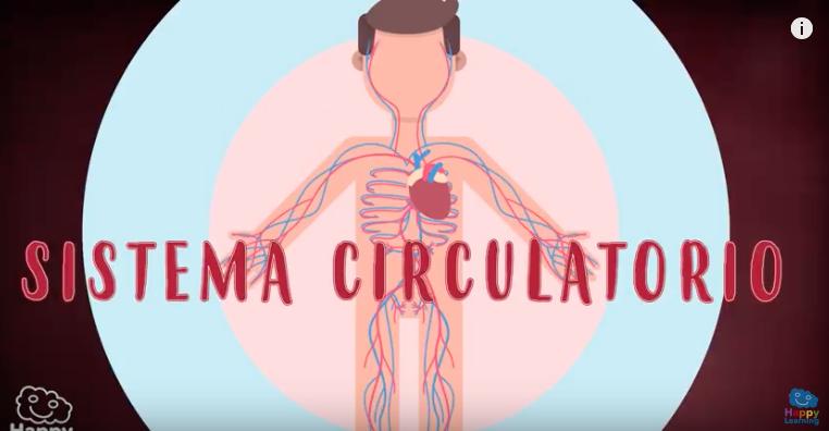 Celulas y transporta las sistema el hacia circulatorio que desde