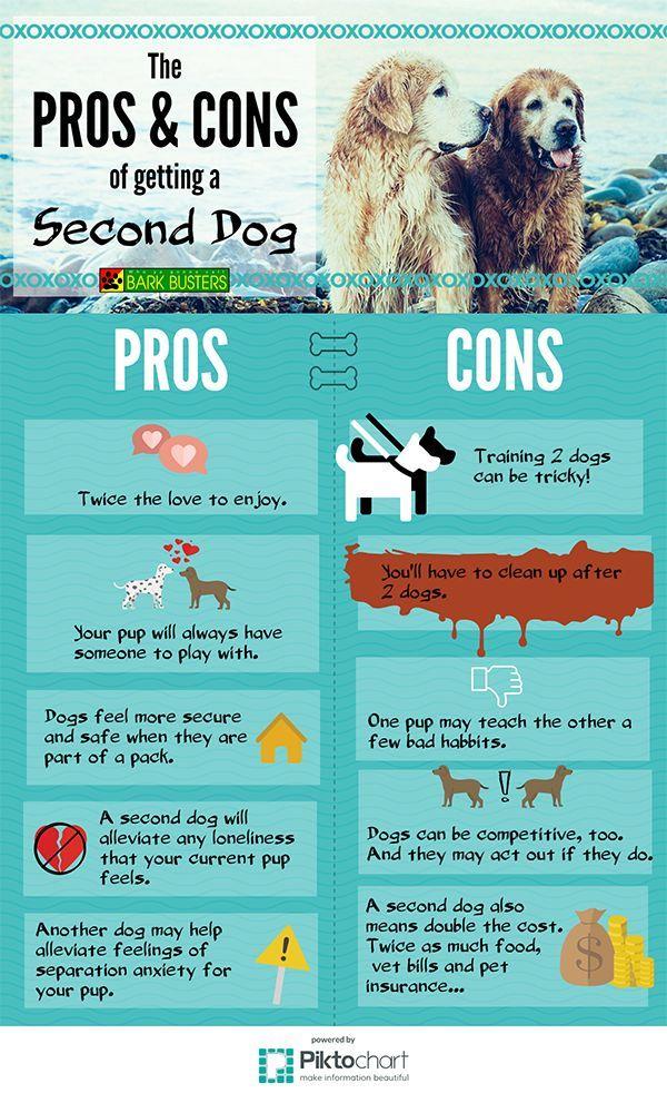 Bear Border Collie Mix 1 Y O Totoredaca Dog Park Mississauga