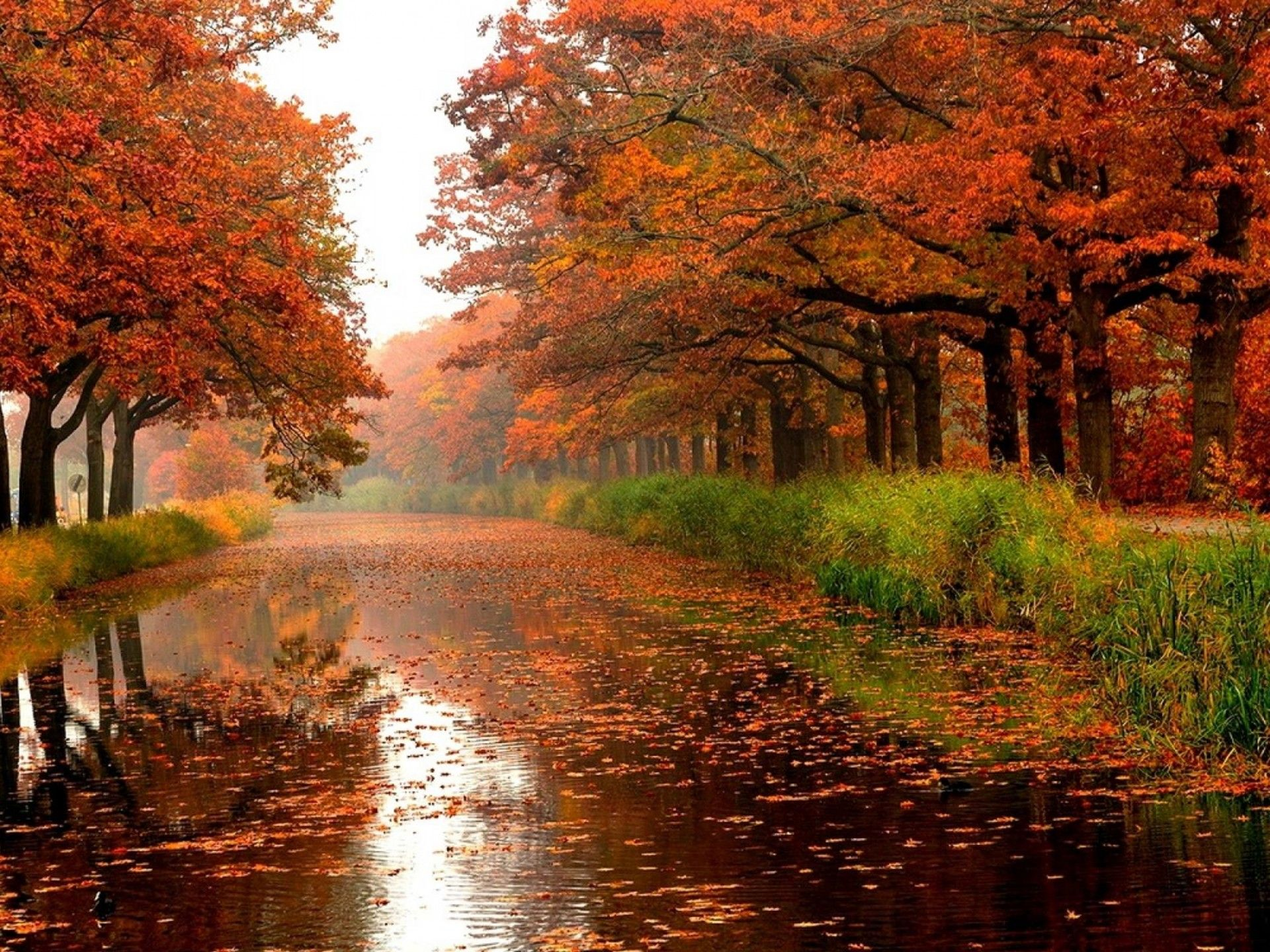 Image Result For High Resolution Autumn Rain In The City Wallpapers Autumn Landscape Autumn Rain Beautiful Landscapes