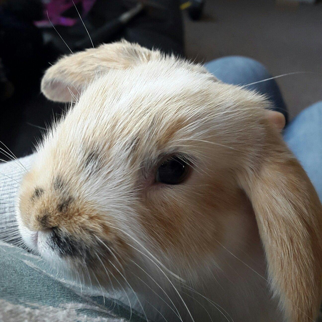 Pets Bunny  Babyanimal Rabbit