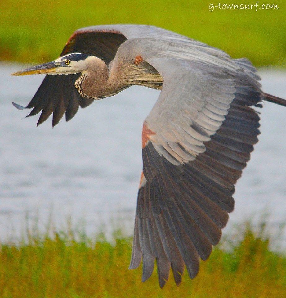 #GalvestonNature#Birding