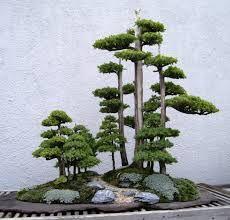 Výsledek obrázku pro bonsai