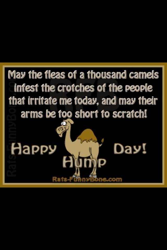 Happy Hump Day Hump day quotes, Hump day humor, Funny quotes
