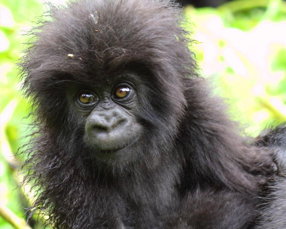 African mountain animals - Animal