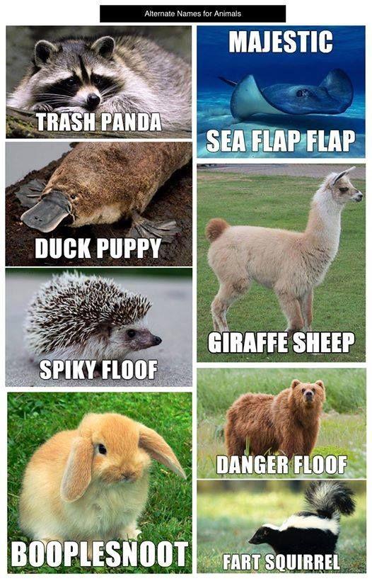 Alternative animal names Funny animal names, Funny