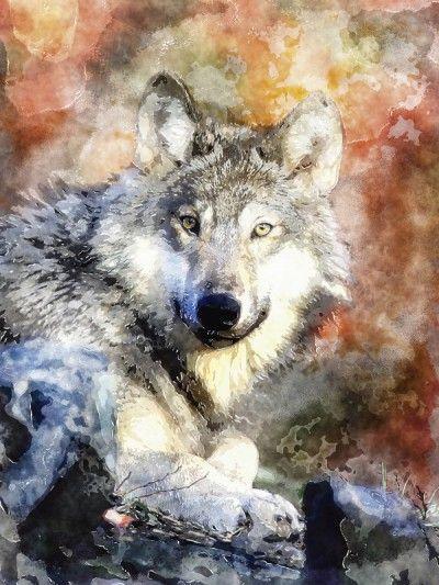UtArt: Wolf - Bild auf Alu-Verbundplatte