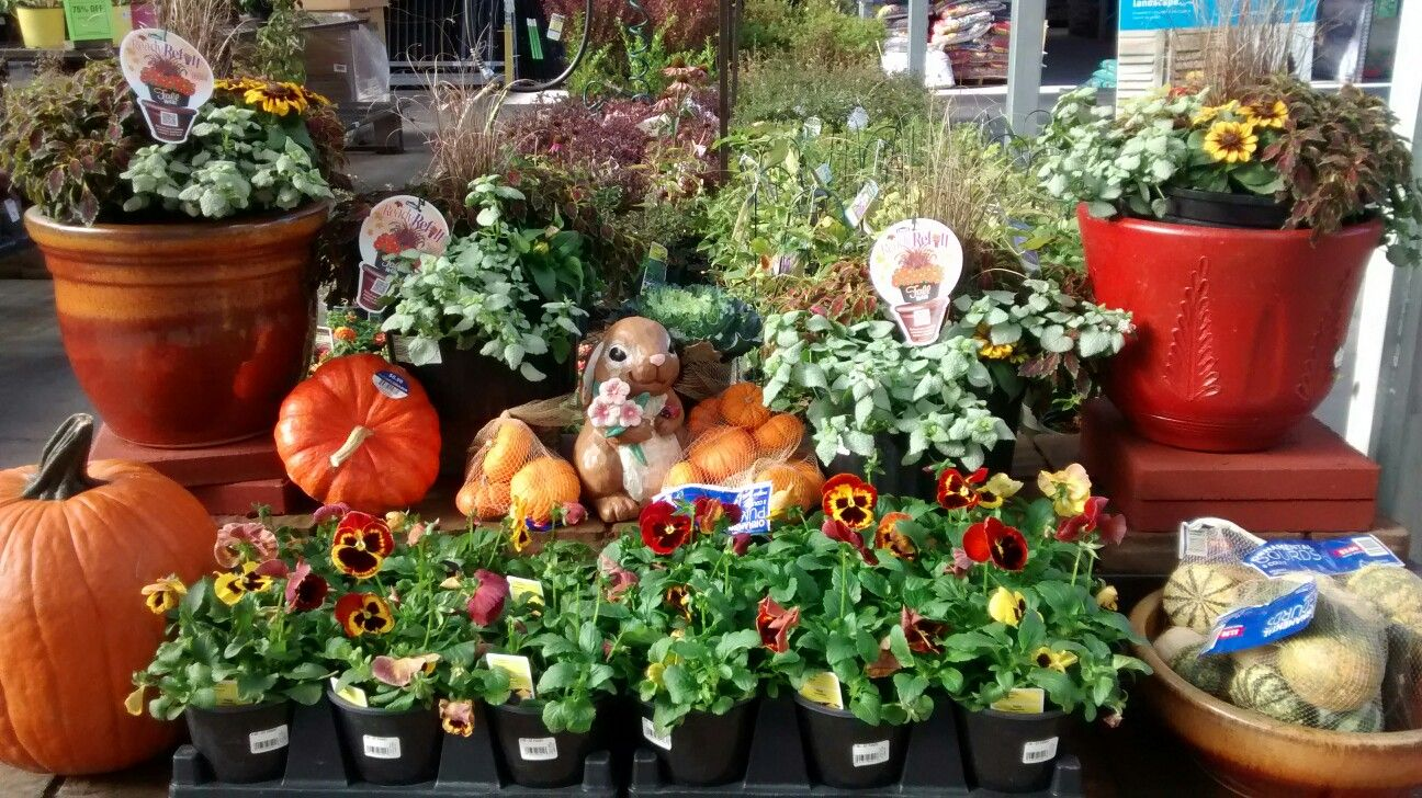 Fall Flowers At Lowes · Fall FlowersRetail DisplaysGarden Center Displays Lowes