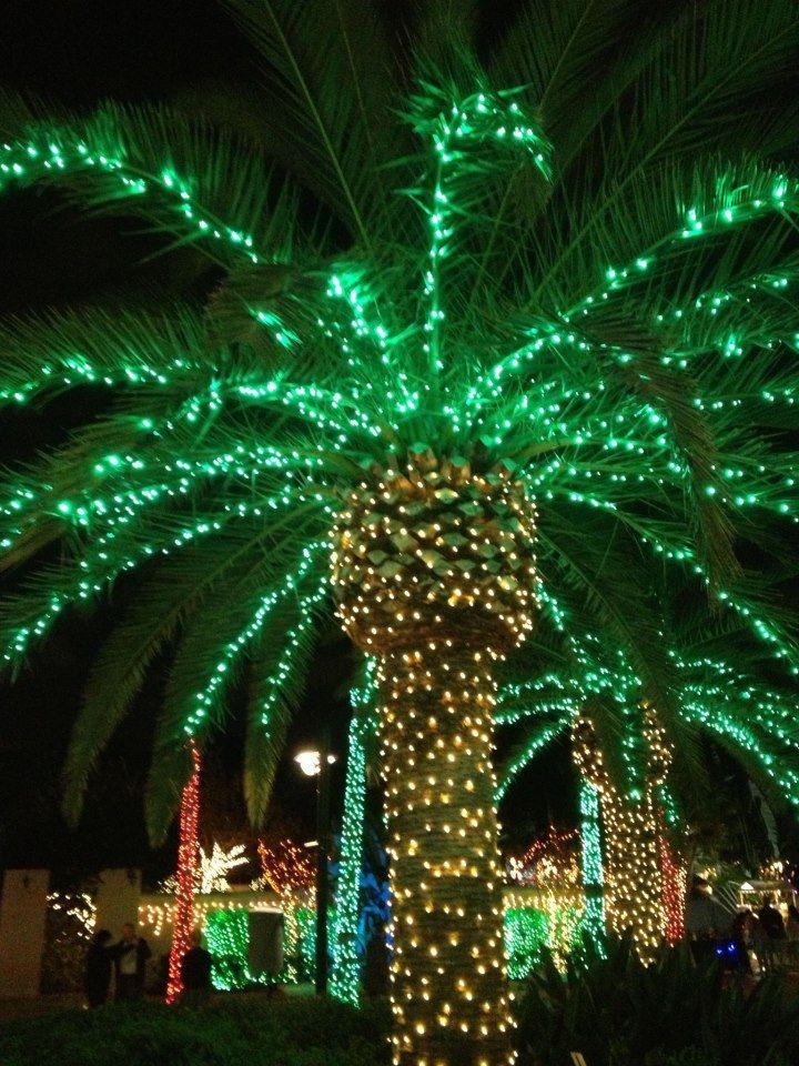 Christmas at the Florida Botanical Gardens