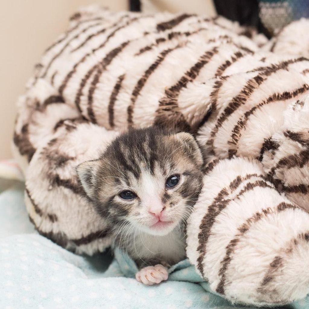 Kitten Lady Kittenxlady Twitter Kitten Pictures Cute Little Animals Kittens