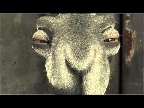 Bright Eyes End Cosmetics Testing On Animals Bright Eyes Pig Eyes Cruelty Free Beauty