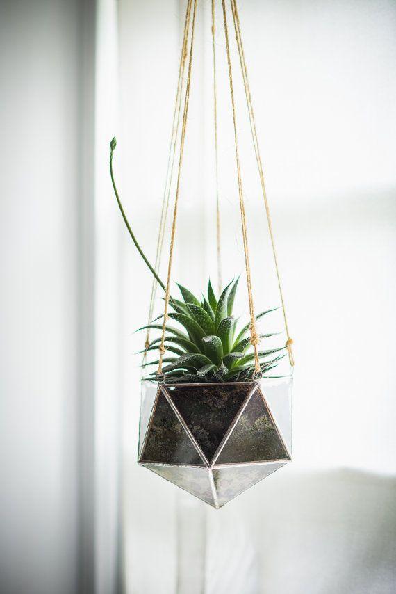 Linea Terrarium Large For Air Plant Terrarium Or Small Succulent