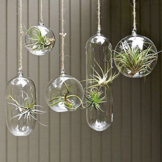 Inspiration Hang Air Plants In Glass Bubbles Plant In Glass