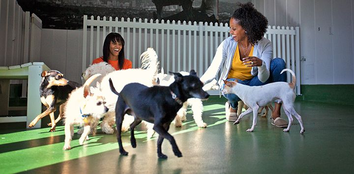 Dog Play Group At Local Shelter Best Friends Atlanta Assists Local Shelters And Rescue Groups Best Friends Animal Society Cat Help