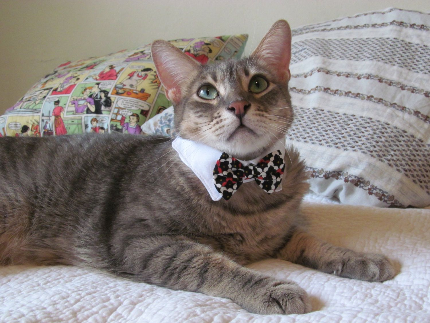 Classy cat white shirt collar & red/black/white bow tie