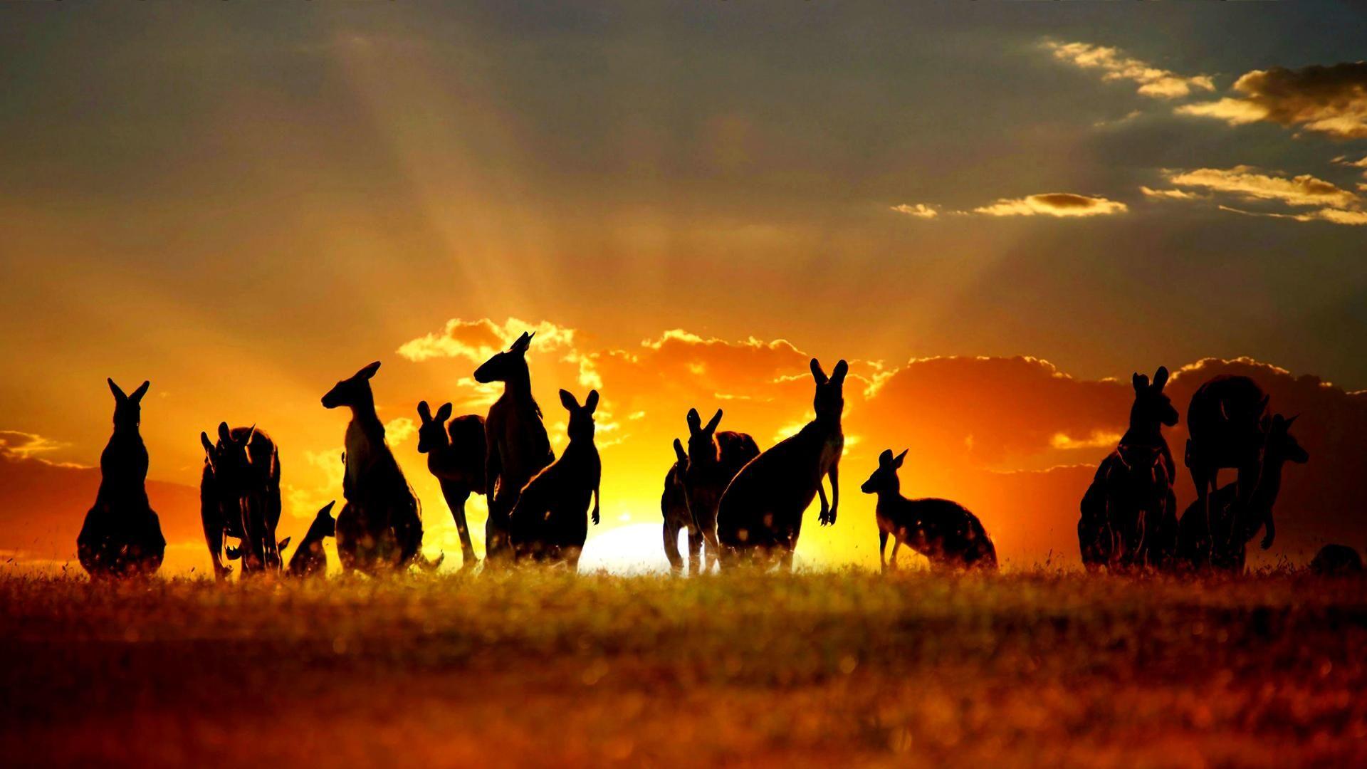 Free australia backgrounds art wallpapers pinterest australia