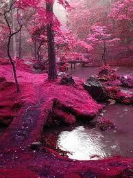 Resultado de imagen para paisajes de arboles en flor
