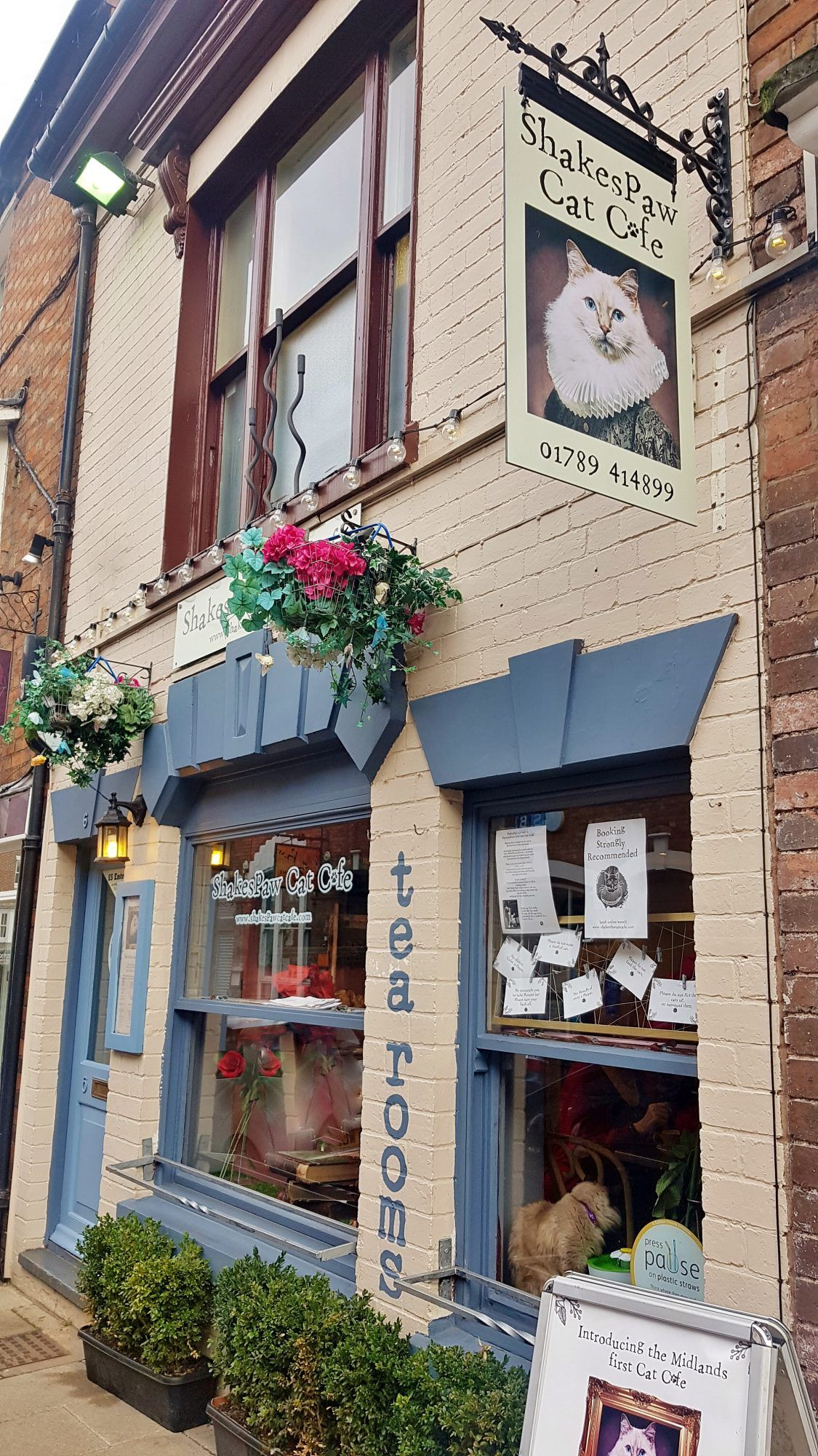 Review Shakespaw Cat Cafe Stratford Upon Avon Victoria S Vintage Blog Kitty Cafe Cat Cafe Pet Cafe