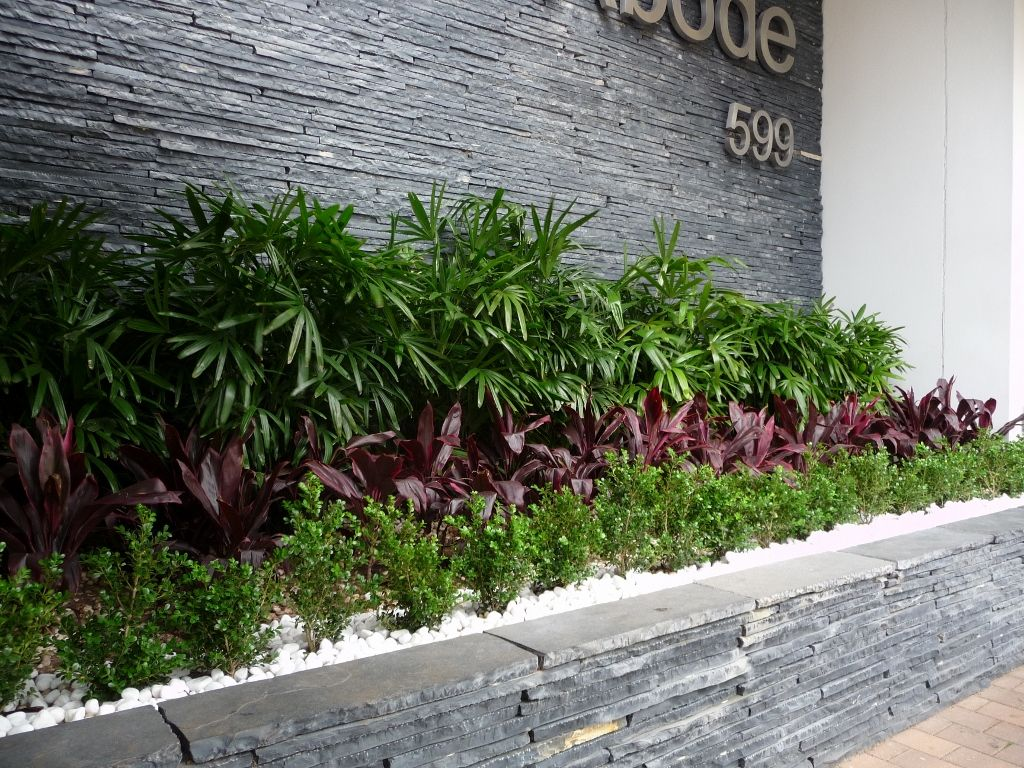 Raphis palm, Cordyline rubra and buxus for a part shaded spot ...