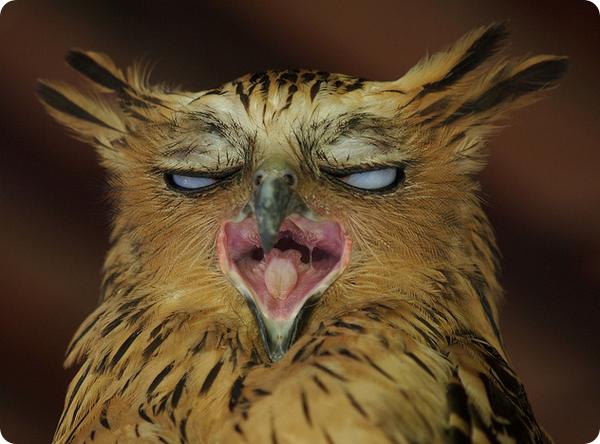 Картинки смешная сова (35 фото) (с изображениями ...