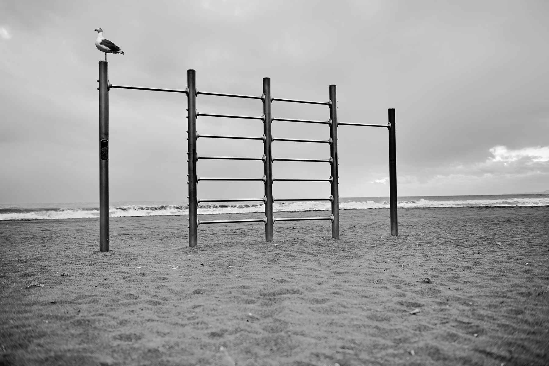 B&N- 8: The seagull