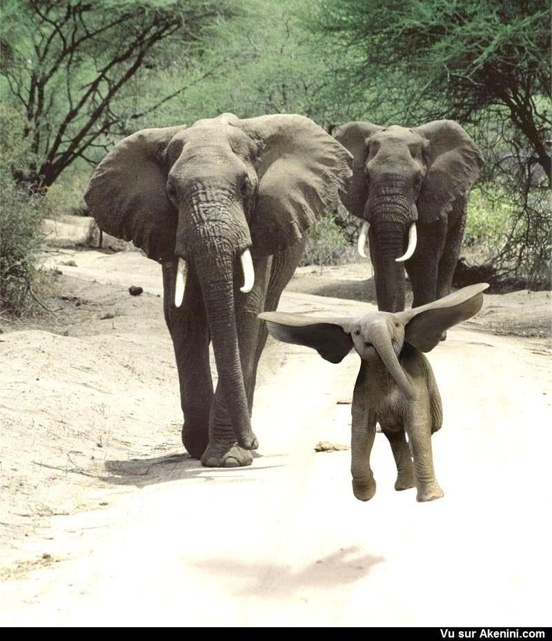 Un éléphanteau qui vole ! - Baby elephant flying !