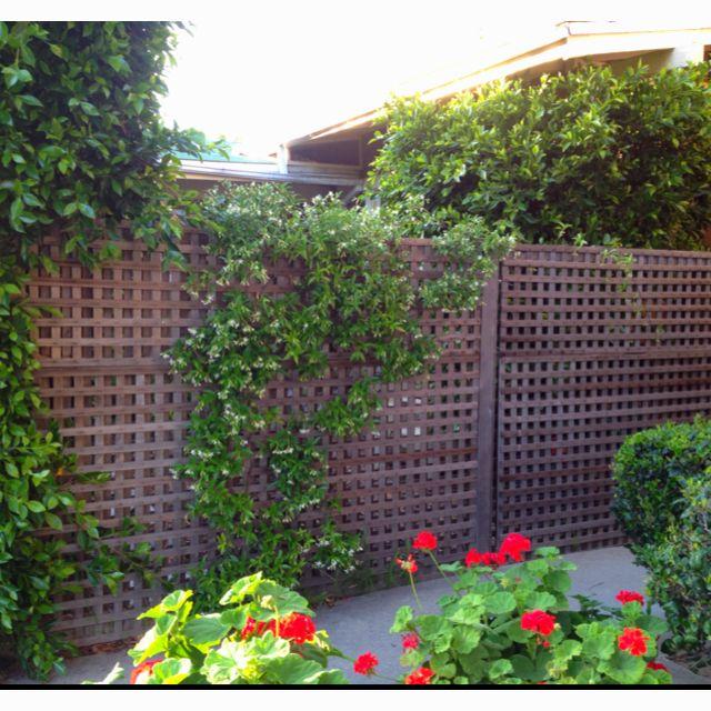 Bungalow lattice fence au-natural...