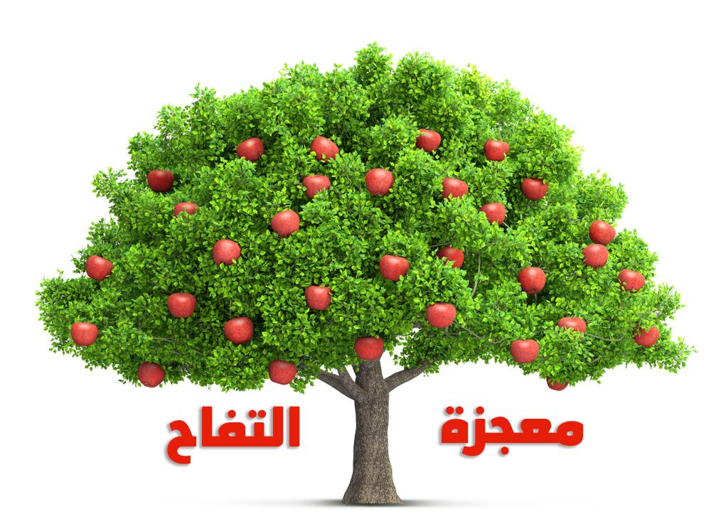 التفاح معجزة الفوائد التي لا تنتهي Red Apple Apple Tree Background Patterns