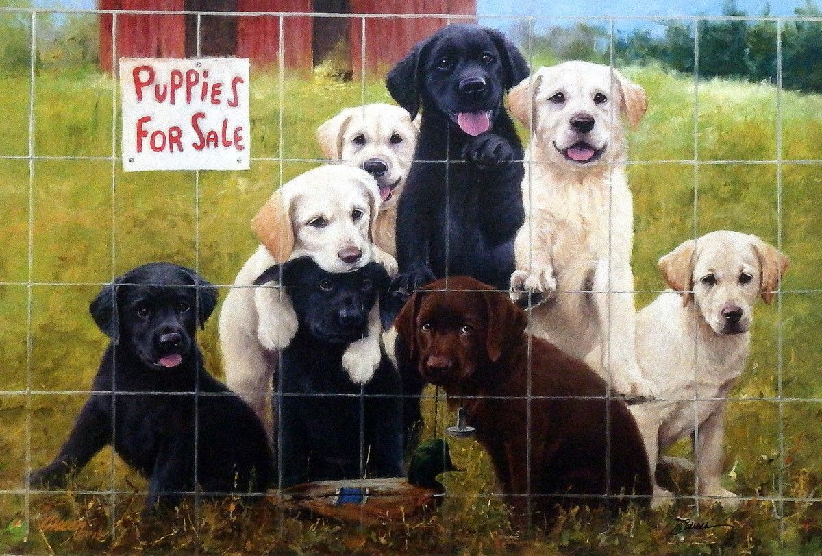 Yellow Lab Dogs For Sale James Killen Puppies For Sale Labradors Signed Print 24 X 16