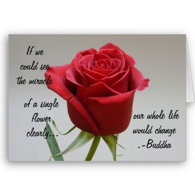 Red Rose Love Quotes 30 Best Valentine Quotes Roses More