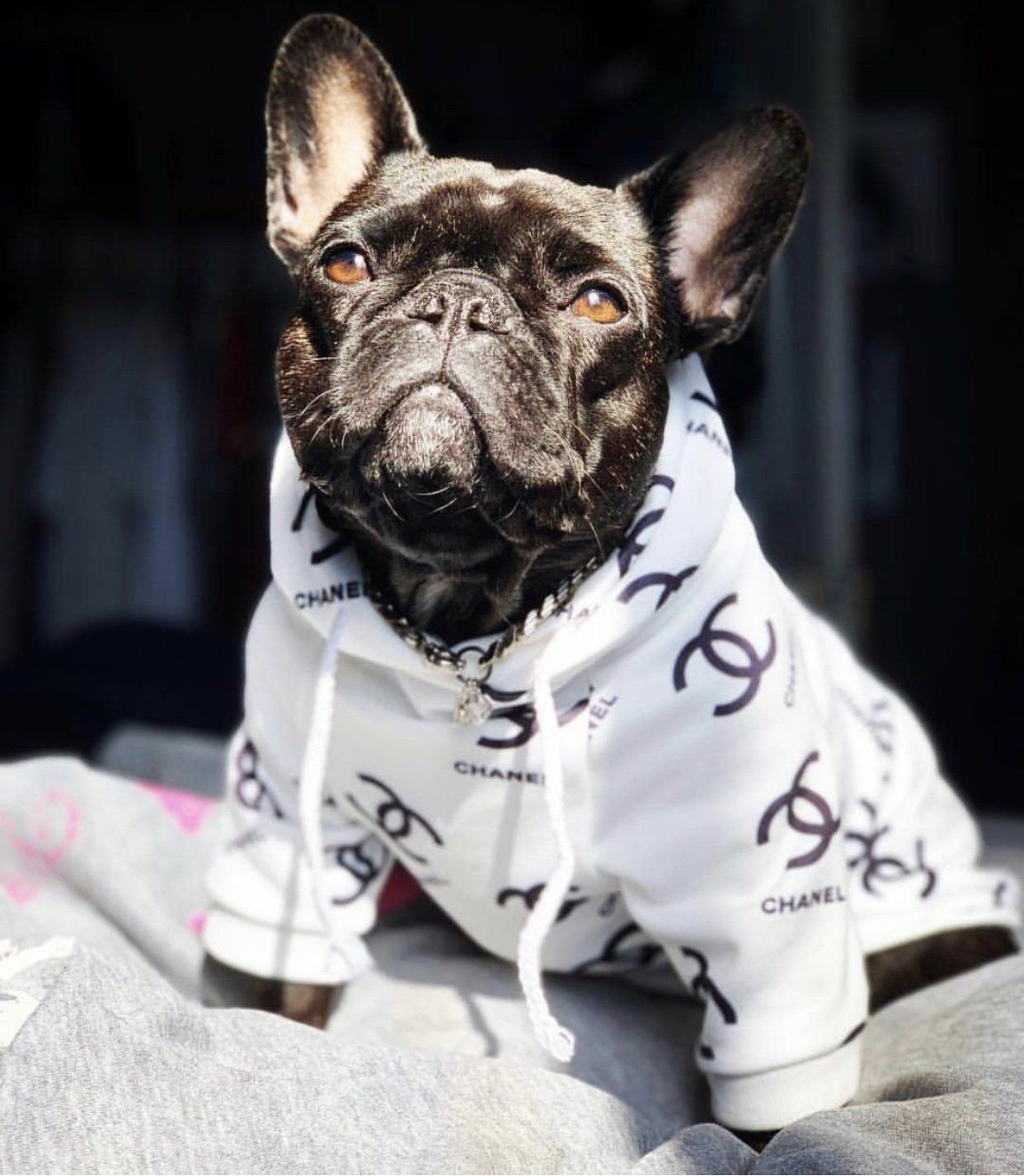 This Woman Made This From A Child S Track Suit Too Cute Puppy Clothes Dog Clothes Cool Pets [ 1355 x 900 Pixel ]