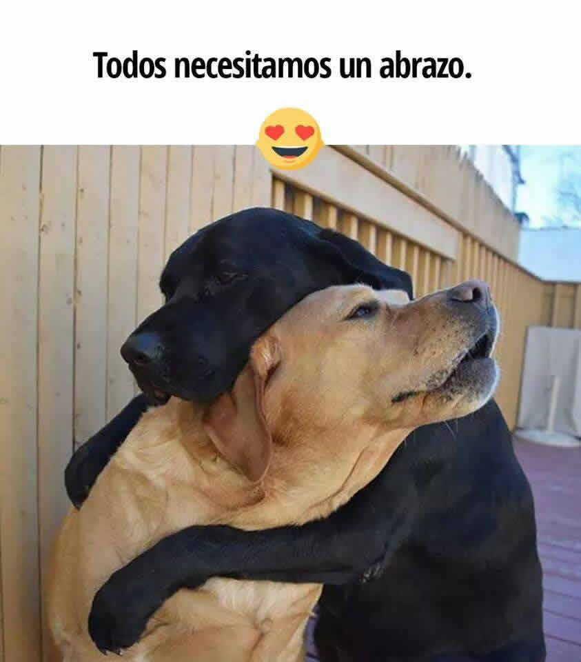 I Heard Your Family Got A Cat Funny Dog Memes Dogs Hugging Cute Animals Funny Animal Photos