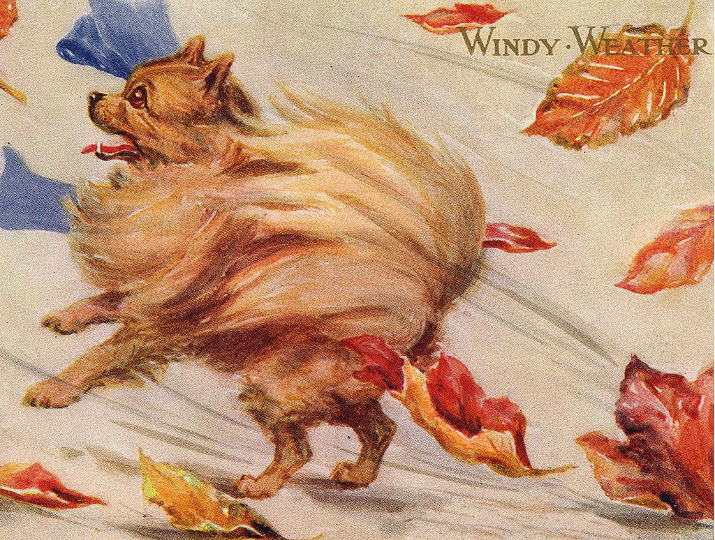 Pomeranian Charming Dog Greetings Note Card Beautiful Pom Walking in The Wind   eBay